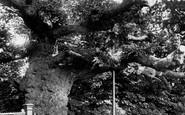Addlestone, Crouch Oak 1904