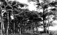 Aldeburgh, Walk In North Fields 1896