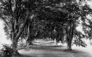 Andover, Beech Avenue, Harewood Forest 1899