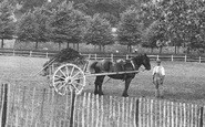 Arundel, Horse And Cart 1906