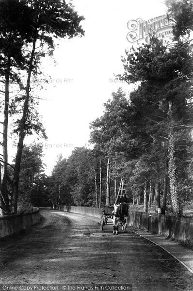 Ascot, Station Road 1906