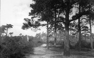 Ash, The Fox Hills 1932