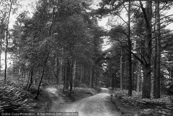 Photo of Ashdown Forest, Broadstone Warren 1908