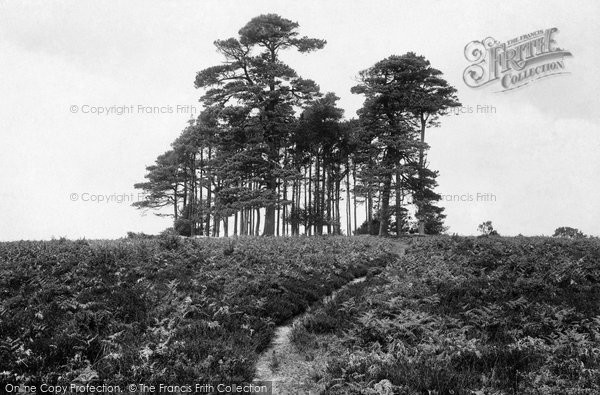 Ashdown Forest, The Camel's Clump 1927