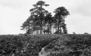Ashdown Forest photo