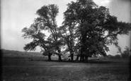 Ashtead, The Woods 1928
