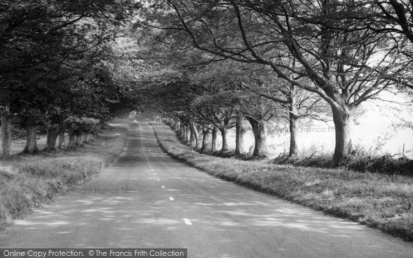 Badbury Rings, The Avenue c.1960