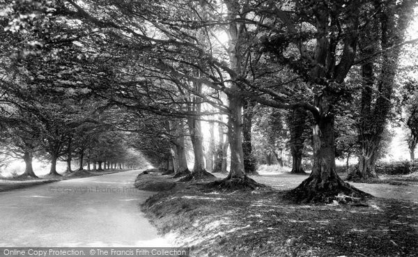 Badbury Rings, The Avenue Of Trees 1936