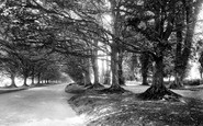 Badbury Rings, The Avenue Of Trees 1936
