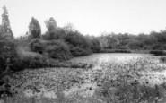 Badger, Pond c.1965