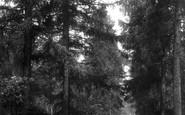 Bagshot, Swinley Woods 1901