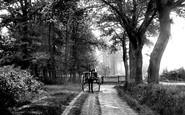 Bagshot, The Wood 1906