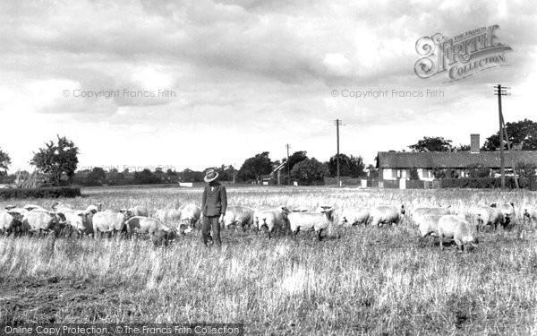 Barking Tye, Shepherd 1934