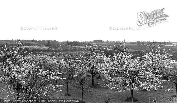 Barming, Blossom Time c.1960