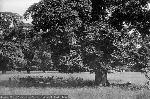 Basingstoke, Hackwood Park, Deer 1904