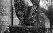 Bexhill-on-Sea, The Old Walnut Tree 1903