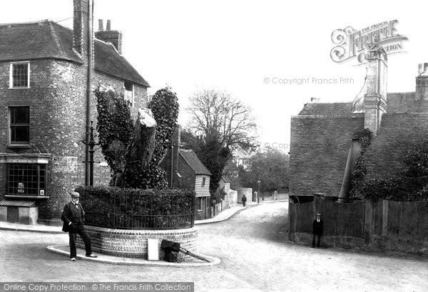 Bexhill, Walnut Tree 1903