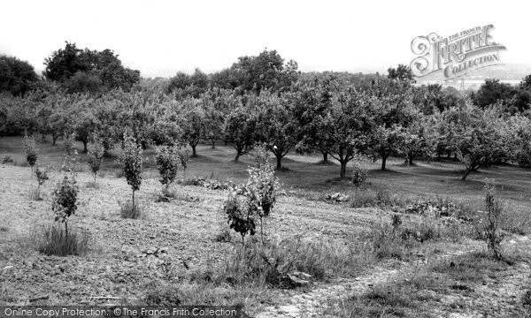 Bidborough, An Orchard c.1960