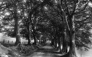 Bishops Lydeard, Beeches 1906