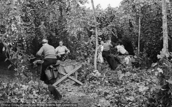 Bodiam, Hop Picking c.1955