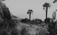Bonchurch, East Dene, In The Grounds c.1955