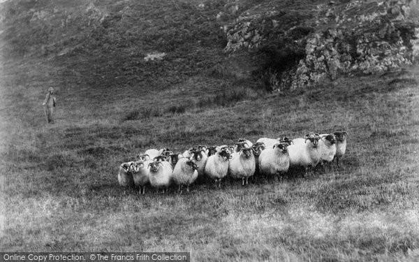 Borrowdale, Sheep On Castle Crag c.1865