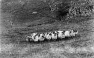 Borrowdale, Sheep On Castle Crag c.1865