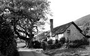 Bossington, The Famous Walnut Tree c.1950