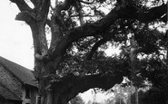 Bossington, The Old Tree c.1950