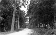 Bovington, The Woods, Memin Road c.1955