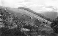 Box Hill, The Slopes 1906