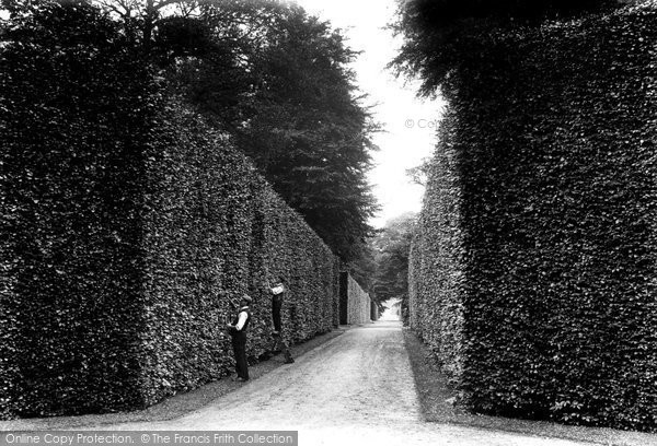 Bramham, Park, Beech Hedges 1909