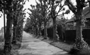 Brandon, The Avenue c.1950