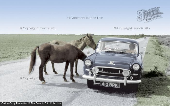 Bucklers Hard, New Forest Ponies c.1960