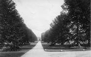 Budleigh Salterton, Bicton House, Avenue 1890