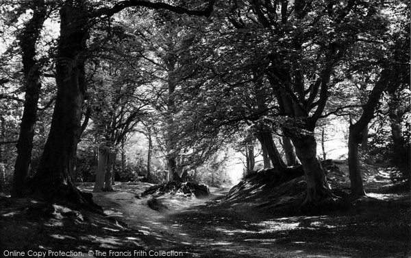 Burley, The Forest c.1960