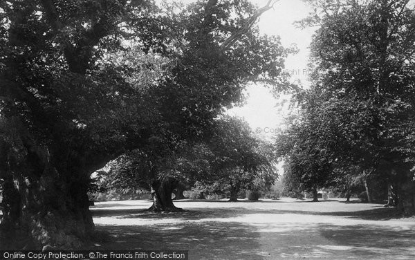 Burnham, Beeches 1896