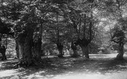 Burnham, Beeches 1896