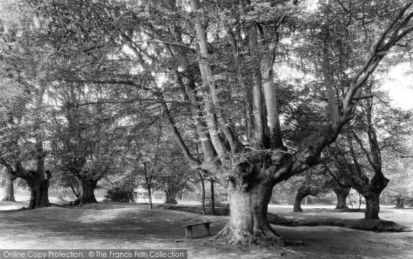 Photo of Burnham, Beeches 1929