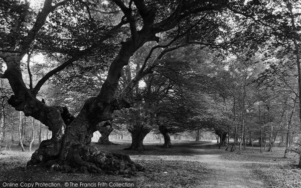 Burnham, Beeches 1929