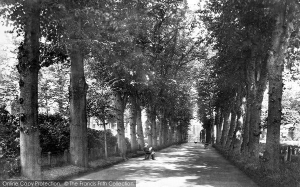 Bury St Edmunds, Avenue In Churchyard 1898
