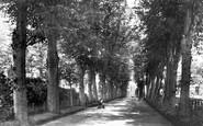 Bury St Edmunds, Avenue In Churchyard 1898