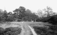 Byfleet, View On New Zealand Golf Links 1906