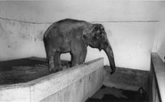 Cleethorpes Zoo, The Elephant C1965