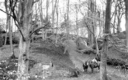 Compton, Ice House Woods 1907