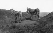 Flamborough, Donkeys At Danes Dyke 1888