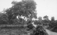 Harrogate, Harlow Moor 1914