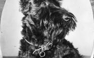 Holy Island, Scottish Terrier c.1955