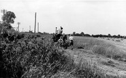 Latchingdon, Harvesting c1960