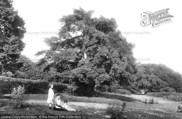Merrow, Downs, Fairyland  1904